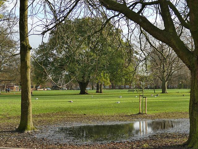Pearson Park puddles