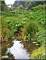 SW7627 : View upstream from the footbridge over the pool, Trebah Garden by habiloid