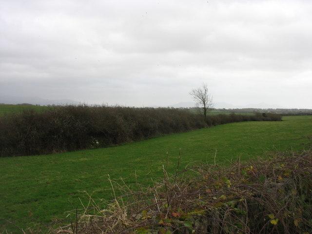 Fields north-west of Brynsiencyn