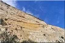TQ3303 : Black Rock Cliffs, Brighton by PAUL FARMER