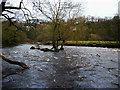 SE1323 : Trees in the River Calder, Southowram by Humphrey Bolton