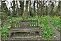 TQ1450 : Ranmore Common: Josephine and David Johnson memorial seat by Michael Garlick