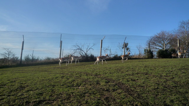 Animals at West Midland Safari Park