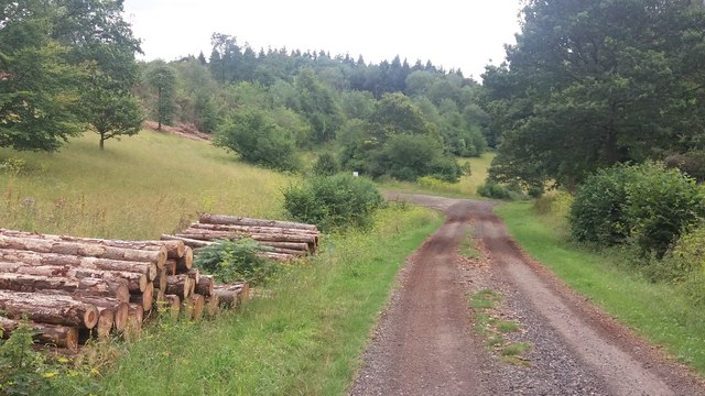 Bridleway heading to Wellclose Gate