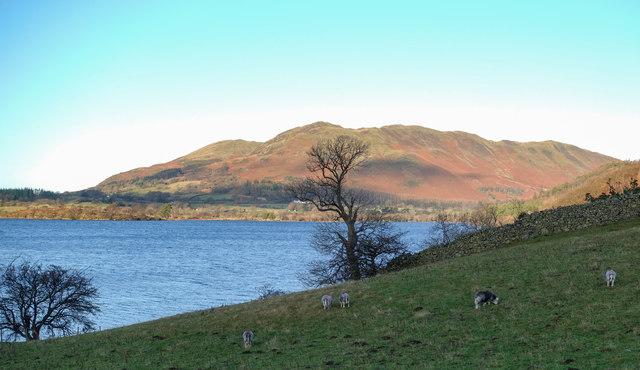 Sheep in field beside Crummock Water