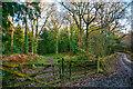 SS4922 : Huntshaw : Woodland Track by Lewis Clarke