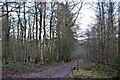 NT5042 : Path in Big Wood, Wooplaw by Jim Barton