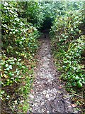 SX5857 : Permitted path, Walks Brake by jeff collins