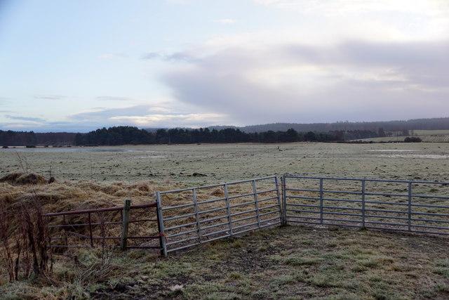 Fields at Wester Dalziel
