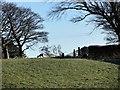 NZ1152 : Roe Deer at Derwent View by Robert Graham