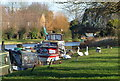 TL4659 : Swans by the River Cam by Alan Murray-Rust