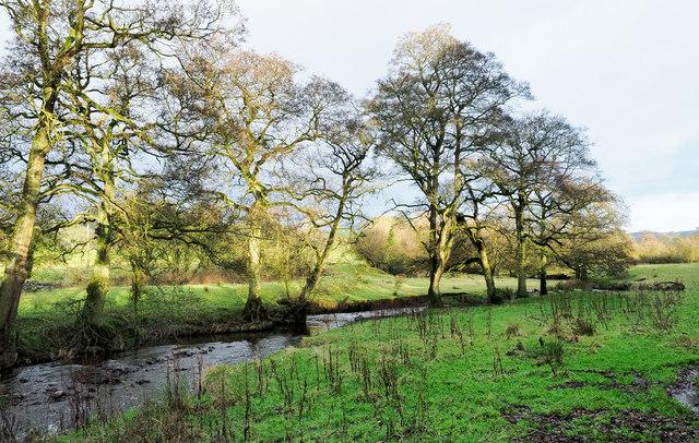 Trees beside River Churnet