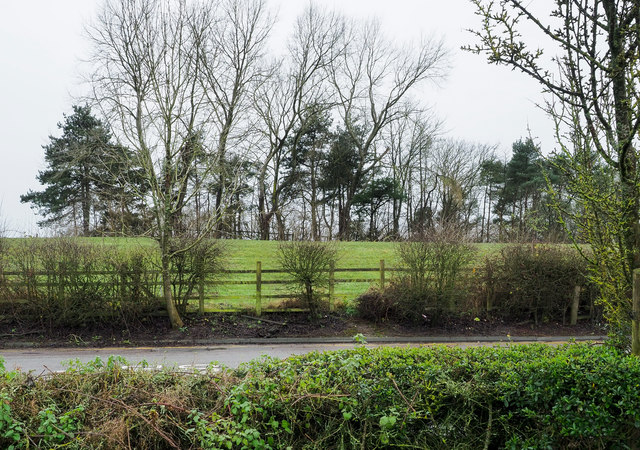 Trees and field west of Knutsford Services