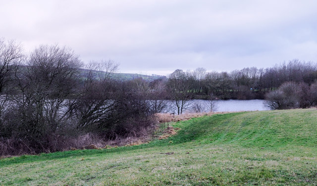 Grass and bushes on east side of Tittesworth Reservoir