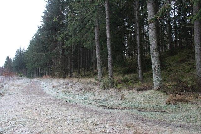 Woodland track at East Brathens