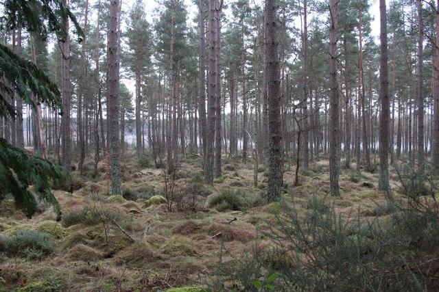 Brathens Wood