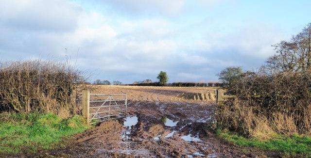Muddied field north of Pershall