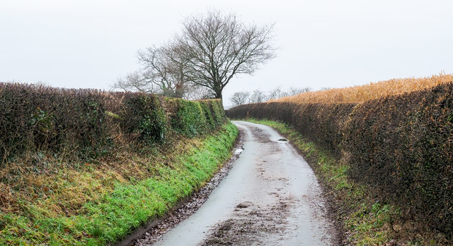 Waltonhurst Lane descending north-west