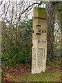 TL4658 : Blackbird, Mill Road Cemetery by Alan Murray-Rust