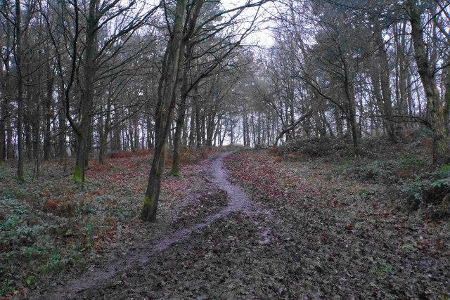 Footpath on Satnall Hills