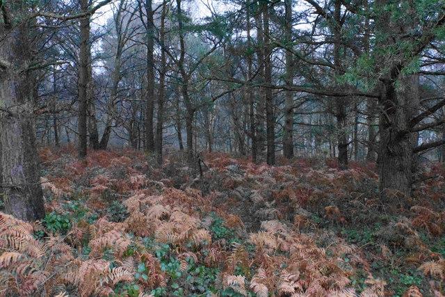 Woodland on Satnall Hills