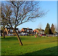 ST3091 : Trees in the grounds of  Malpas Park Primary School, Newport by Jaggery