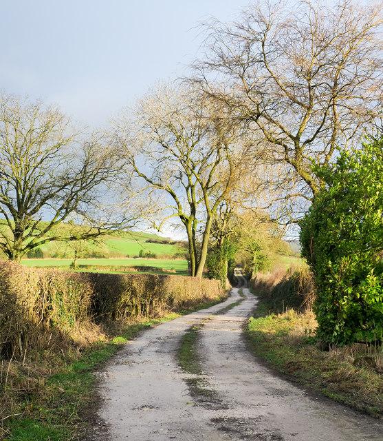 Whitty Lane