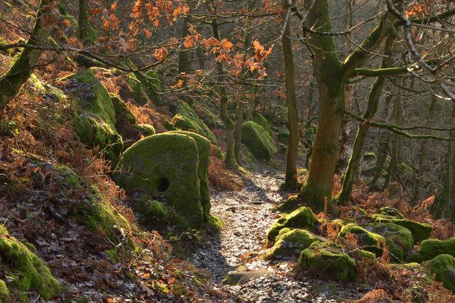 Millstones in the Woods at Froggatt Edge, Derbyshire