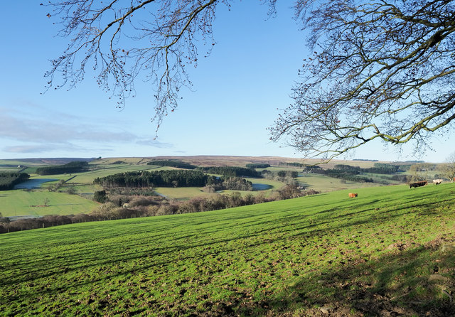 Field above Baal Hill Wood