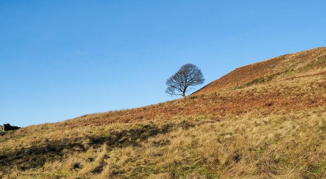 Lone tree on bracken slope
