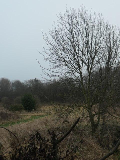 Scrubland near Fieldhead Hospital