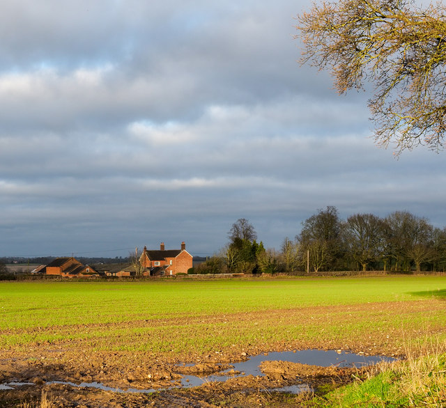 Field with emerging crop... and standing water
