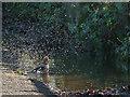 SJ7856 : Bird taking a bath by Stephen Craven