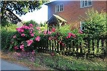 TL4028 : Rose garden in Little Hormead by David Howard