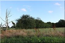TL4228 : Field in Furneux Pelham by David Howard