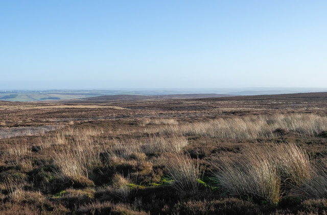 Moorland in vicinity of East Collierlaw Moss