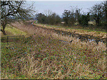 SD7908 : Manchester, Bolton and Bury Canal North of Rothwell Bridge by David Dixon
