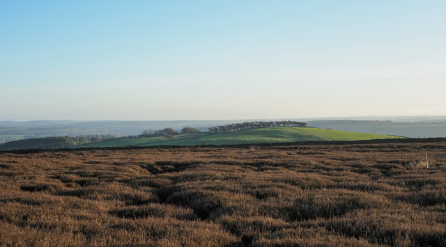 Rough heather of Wolsingham North Moor