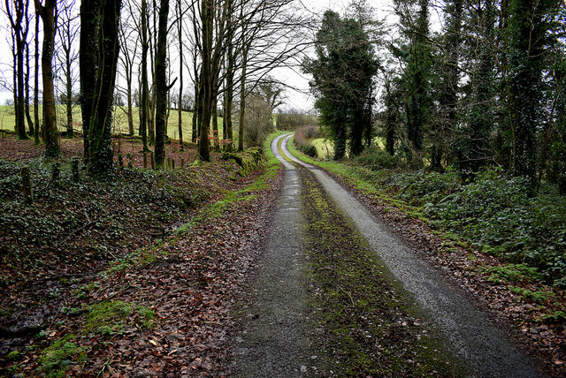 Road through the forest at Mullaghmore