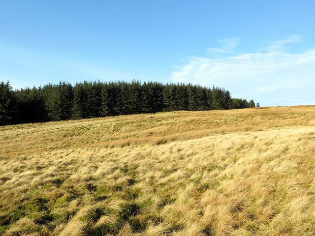 Moorland and forest at Wholhope Hill