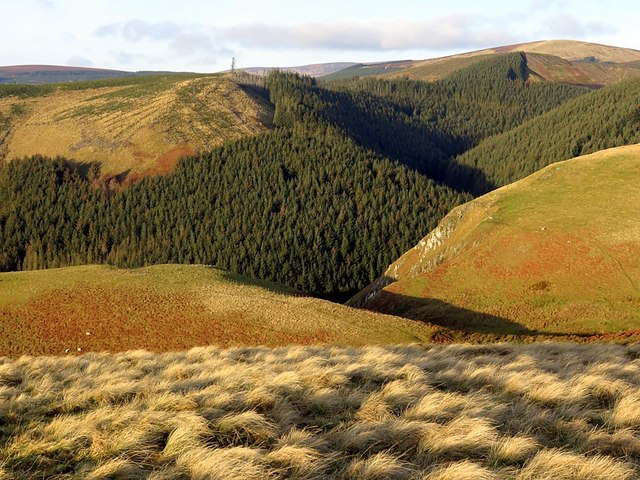 Valley of Wholhope Burn from Puncherton Hill