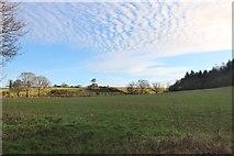 SU2767 : Field by Bath Road, Chisbury by David Howard