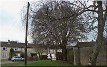 ST8670 : Tupman Road, Corsham by David Howard