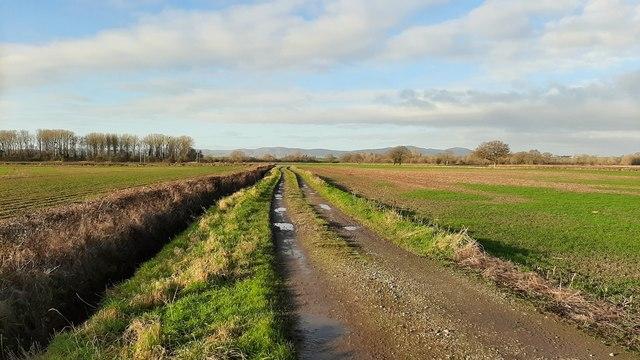 Farm track onto the Severn floodplain