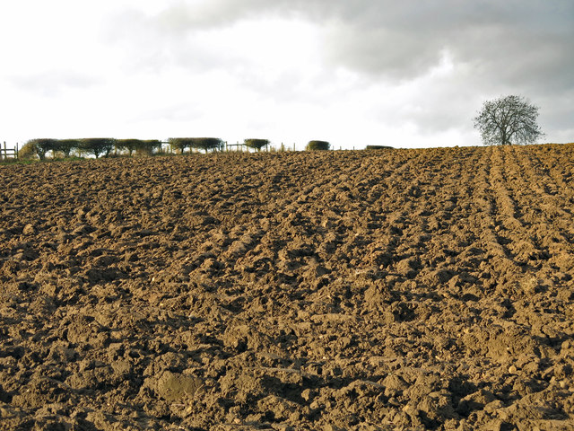 Ploughed field west of Ketton Lane