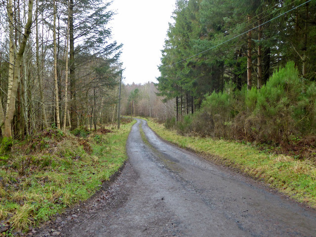 Road in Bowmont Forest