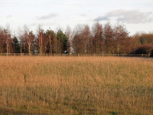 Farmland between Florida Fields and Elton Moor Farm