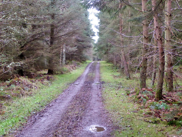 Track, Bowmont Forest