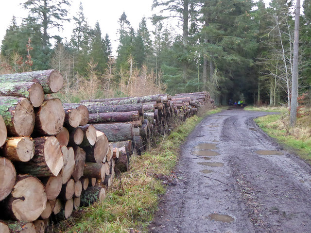 Timber stacks, Bowmont Forest