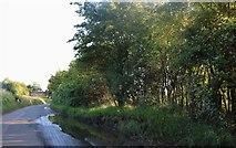 TL4427 : Albury Road, Furneux Pelham by David Howard